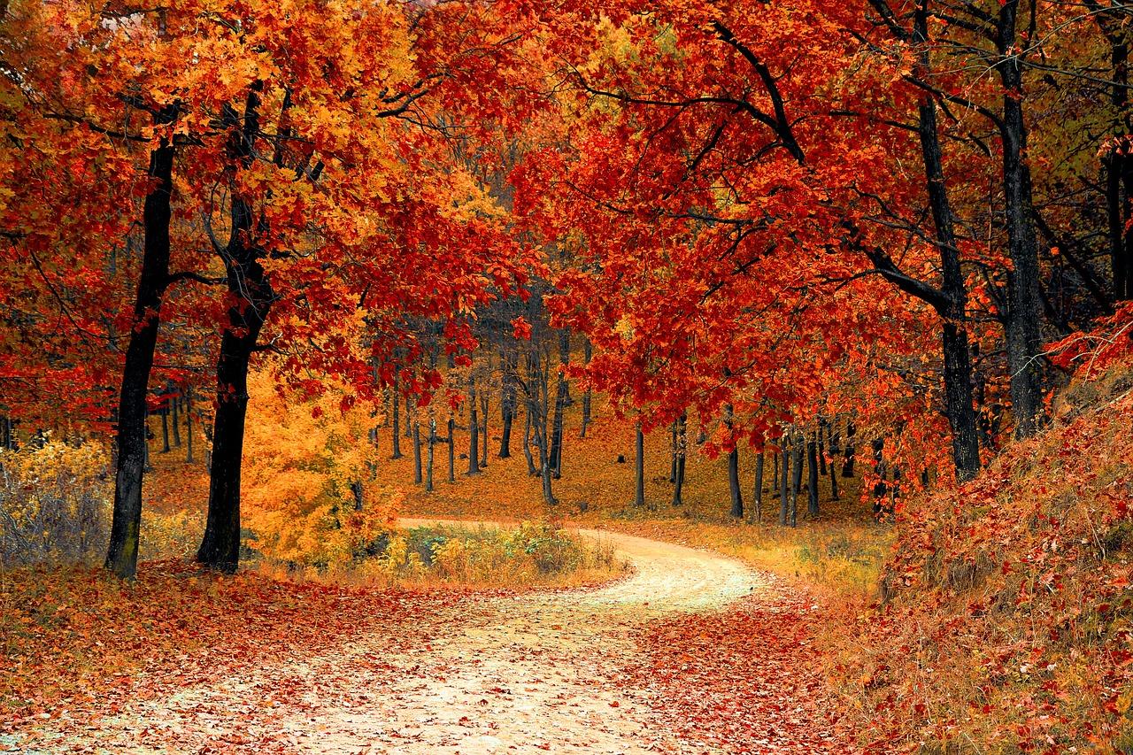 Les saisons idéales pour partir au Canada